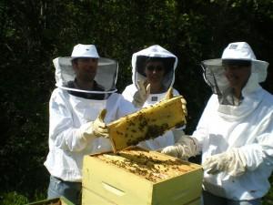 Les membres de l'Abeille en pleine activité. De jeunes apiculteursparticipent également à différents ateliers.