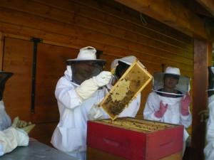 Autour de la ruche pour le adeptes.
