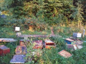 Ce qui restait du rucher de Bernard Stierli ...