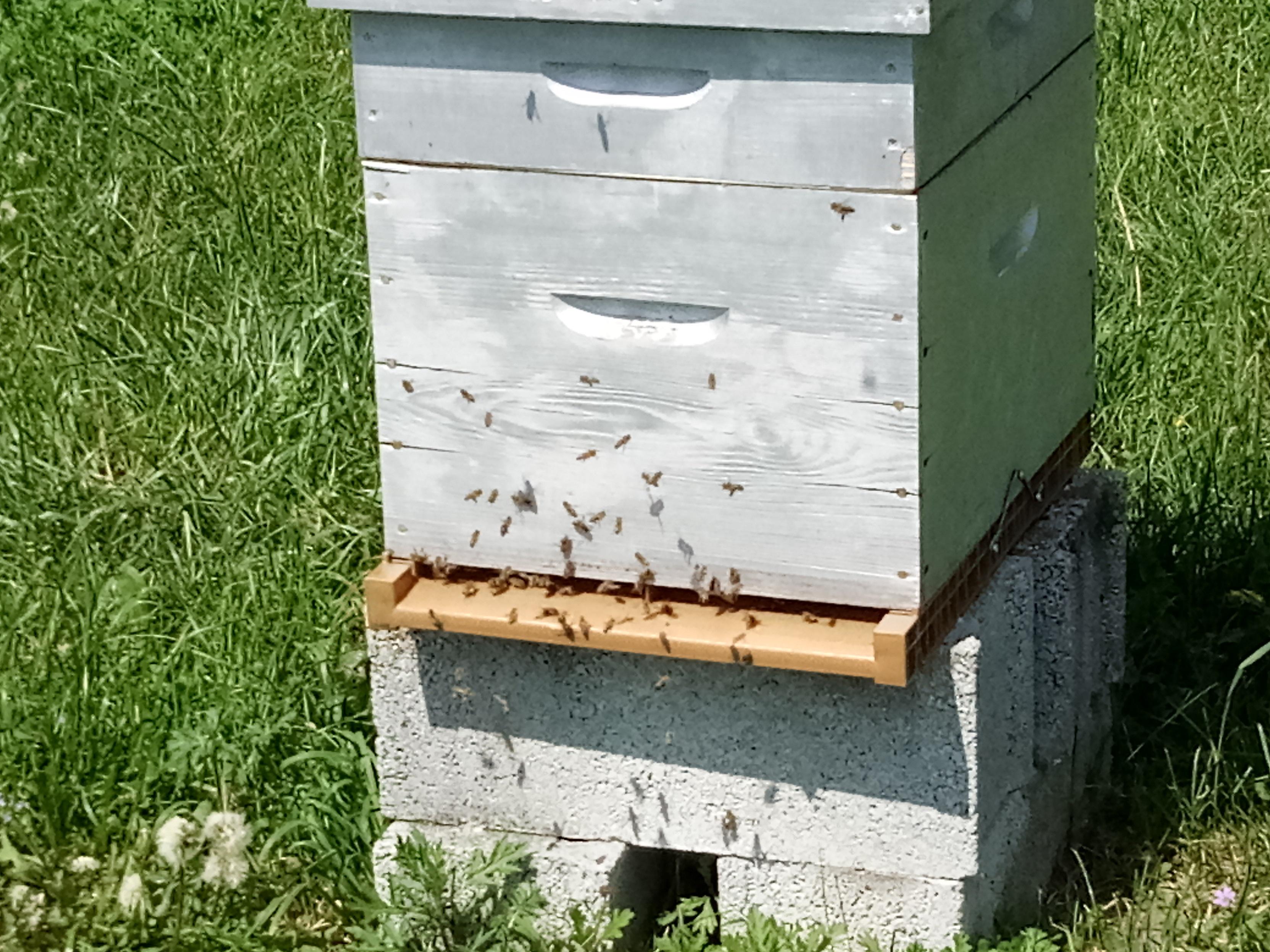 hivernage des abeilles you tubes